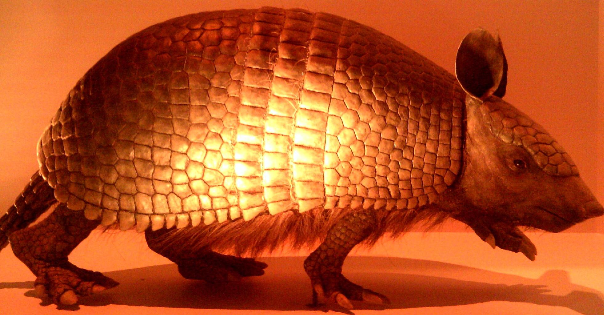 Ancient giant armadillo - photo#9